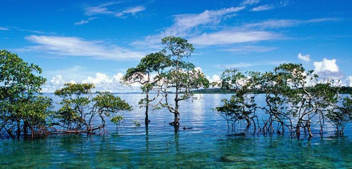 package holidays to Andaman Island